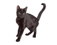 Zwarte Cat Arching Back royalty-vrije stock foto's