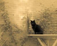 Zwarte Cat In Dream Garden Stock Afbeelding