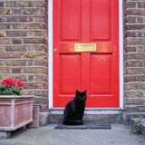 Zwarte Cat In Front Of Red-Deur Royalty-vrije Stock Foto