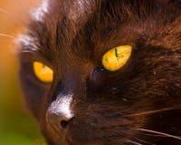 Zwarte Cat With Golden Eyes In de Zonneschijn Royalty-vrije Stock Fotografie