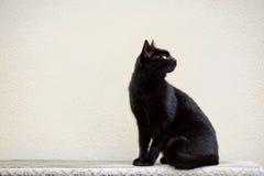 Zwarte Cat On Ornate Bench stock afbeelding