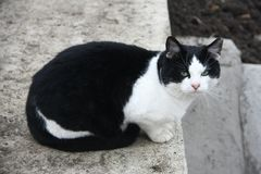 Zwarte Cat Sitting op Beton stock afbeelding