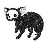 Zwarte Chihuahua Stock Fotografie