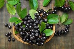Zwarte chokeberry Aronia-melanocarpa in rieten mand royalty-vrije stock foto's