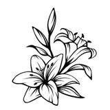 Zwarte contour van leliebloemen Vector illustratie royalty-vrije illustratie