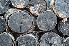 Zwarte decoratieve berklogboeken met korstmos, mos, vorm en paddestoelen Decor mobiele koffie royalty-vrije stock foto