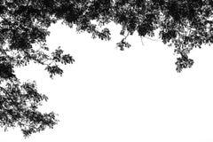 Zwarte die bladeren op witte achtergrond worden geïsoleerd Stock Afbeeldingen