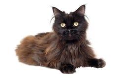 Zwarte die kat op een witte achtergrond wordt geïsoleerd Stock Fotografie