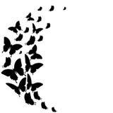 Zwarte die vlinder, op een wit wordt geïsoleerd Royalty-vrije Stock Afbeelding
