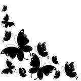 Zwarte die vlinder, op een wit wordt geïsoleerd Stock Afbeeldingen
