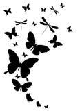 Zwarte die vlinder, op een wit wordt geïsoleerd Stock Afbeelding