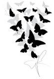 Zwarte die vlinder, op een wit wordt geïsoleerd Royalty-vrije Stock Fotografie