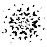 Zwarte die vlinder, op een wit wordt geïsoleerd Royalty-vrije Stock Foto