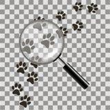 Zwarte dierlijke voetafdrukken met meer magnifier op de witte achtergrond Vector illustratie royalty-vrije illustratie
