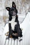 Zwarte Doggie op gang Royalty-vrije Stock Fotografie