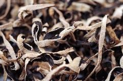 Zwarte droge paddestoelen Royalty-vrije Stock Foto