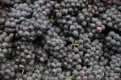 Zwarte druiven royalty-vrije stock fotografie