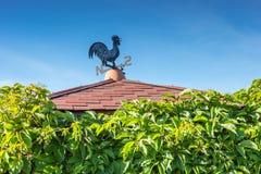 Zwarte en blauwe metaalweerhaan op dak met groene muur van wildernis Stock Afbeelding