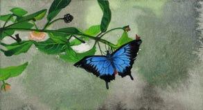 Zwarte en blauwe vlinder Royalty-vrije Stock Foto's
