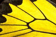 Zwarte en gele vlindervleugel royalty-vrije stock foto's
