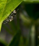 Zwarte en gele wesp die op een blad wandelen stock foto's