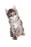 Zwarte en Grey Tabby Kitten Raising Paw royalty-vrije stock afbeelding