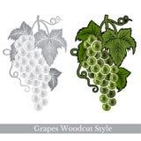 Zwarte en kleurengravureetiket voor voedsel of schoonheidsmiddelen Bos twee van geïsoleerde druiven Stock Foto
