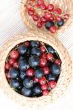 Zwarte en rode aalbes Royalty-vrije Stock Afbeeldingen