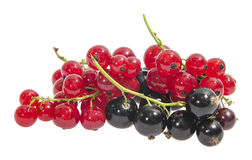 Zwarte en rode aalbessen Royalty-vrije Stock Afbeelding