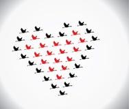 Zwarte en rode zwanen die in de vorm van liefde vliegen Stock Afbeeldingen