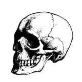 Zwarte enge schedel Stock Fotografie
