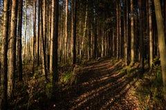 Zwarte Forrest in Rusland De oranje Avondzon glanst door Royalty-vrije Stock Fotografie