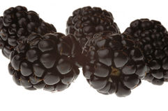 Zwarte Frambozen stock fotografie