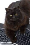 Zwarte geïsoleerder kat en computer Stock Afbeelding