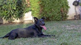Zwarte gemengde rassenhond in de tuin stock foto