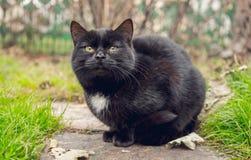 Zwarte groen-eyed kat in de de herfsttuin royalty-vrije stock foto