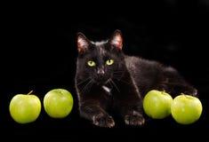 Zwarte groen-eyed kat onder groene appelen Royalty-vrije Stock Foto's