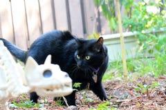 Zwarte Halloween kat Stock Afbeelding