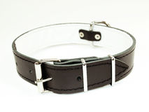 Zwarte halsband Royalty-vrije Stock Foto's
