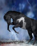Zwarte Hengst Stock Afbeelding