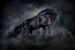 Zwarte hengst in motie Royalty-vrije Stock Afbeeldingen