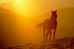 Zwarte Hengst in zonsondergang Royalty-vrije Stock Afbeelding