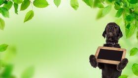Zwarte hond Amy die kleine zwarte lijst, de lentethema houden Stock Foto's