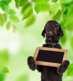 Zwarte hond Amy die kleine zwarte lijst, de lentethema houden Stock Afbeelding