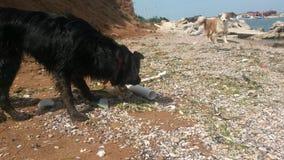 Zwarte hond, bruine hond Royalty-vrije Stock Foto's