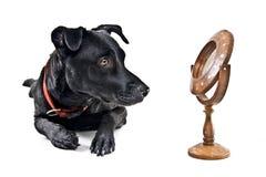Zwarte hond die in de spiegel kijkt royalty-vrije stock afbeeldingen