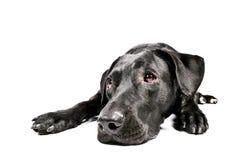Zwarte hond die droevige I kijkt Stock Afbeeldingen