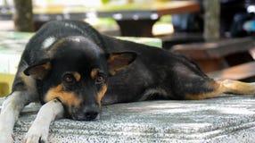 Zwarte Hond die op Granietstoel bepalen Stock Foto's