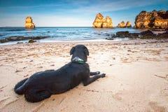 Zwarte hond die op het strand liggen Royalty-vrije Stock Afbeelding
