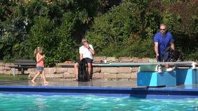 Zwarte hond die in pool springen stock video